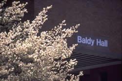 BLOG PIC_BALDYhallBlossoms