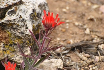 Single orange-petaled flower rising from a rocky desert landscape