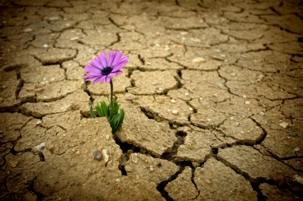 purple flower is growing up from cracked earth