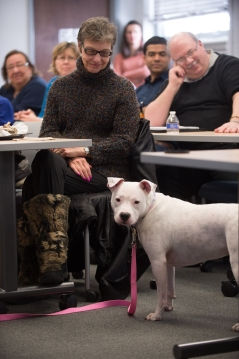 Jewell is attentive during the Joining Forces-UB Brown Bag Lunch. Jewell is a graduate of Dog Tags and a newly certified therapy dog. She stole the show!