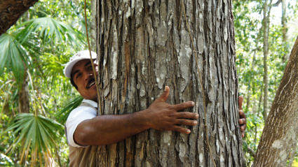 Smiling man in baseball cap with arms hugging a big tree. Only one arm is visible as tree's circumference is too large to encircle with his arms. is too big to get