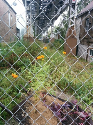 photo shows chainlink fence with two houses under a bridge and yellow marigolds blooming in a small garden patch between them.