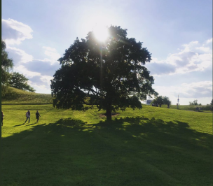 View in Olympia Park Munich: A huge tree backlit by sun, wiht green field and sunny sky. f